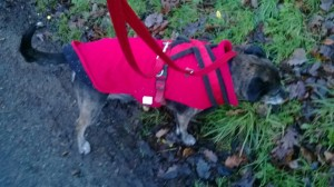 mabel walking in new jacket- red side