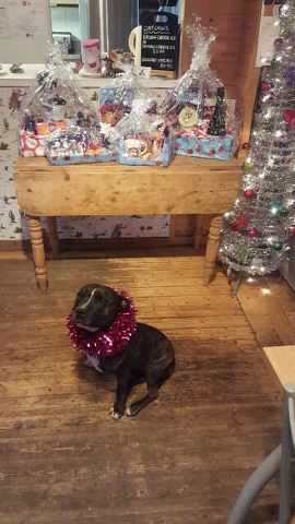 roxy and raffle prizes 2015