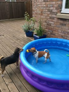 spud and archie and paddling pool