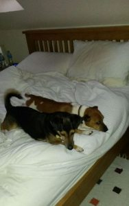 spud and archie in bed