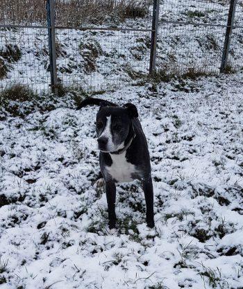 Roger -its snow!