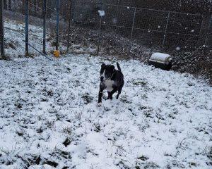 Roger & snow!