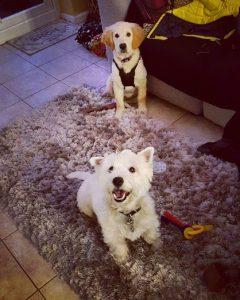 Barney + puppy friend