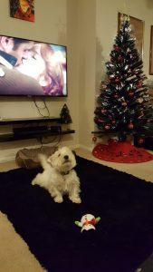 Barney + snowman