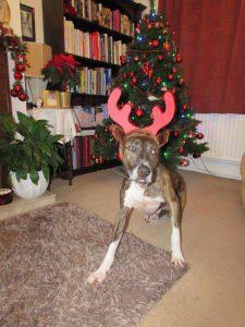 Bob Scott reindeer 2