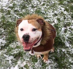 roxy snow 2