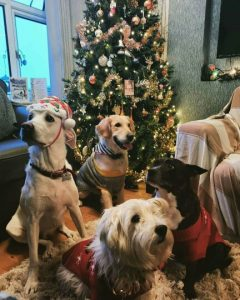 Barney & friends at Christmas 2018