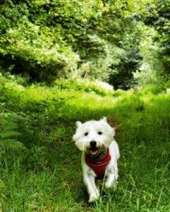 Barney in fields