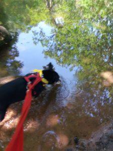 Benny in the stream