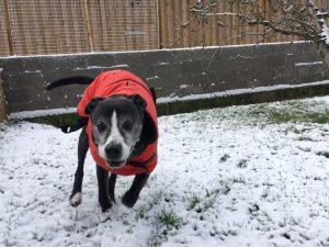 roger snow a