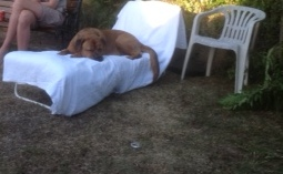 scarlet and her sunbed 1