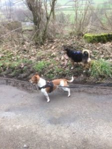 latest walk spud and archie