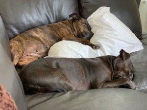 oscar and saffy tired