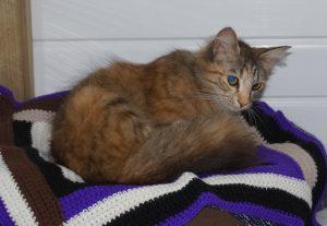 Freya 4