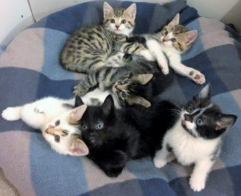 Kittens C