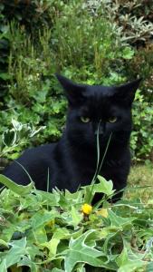 George missing cat 27 8 15