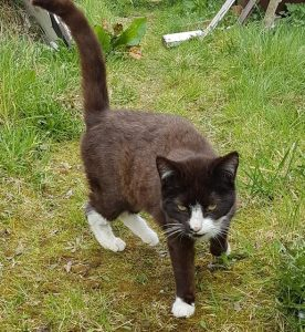 Kingsley Cat April 2
