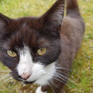 Kingsley Cat April.jpg 1