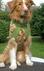Lynn's dog modelling a coat