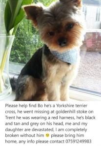 Missing Yorkie