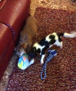 Gizmo & Bonnie toys at Christmas