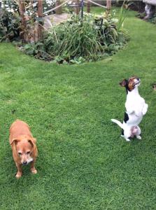 Gizmo & bonnie playing