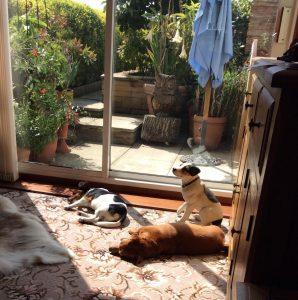 Gizmo enjoying the sun with Bonnie