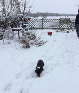 gizmo & Bonnie and snow!