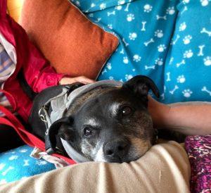 Mabel- comfy!