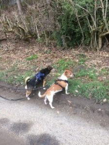 latest walk 3 spud and archie