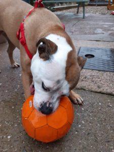 Roxy new ball