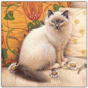 Cheadle ivory cat orange[2666]