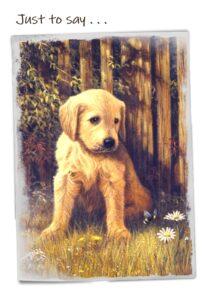 Cheadle notelets dog photo 4